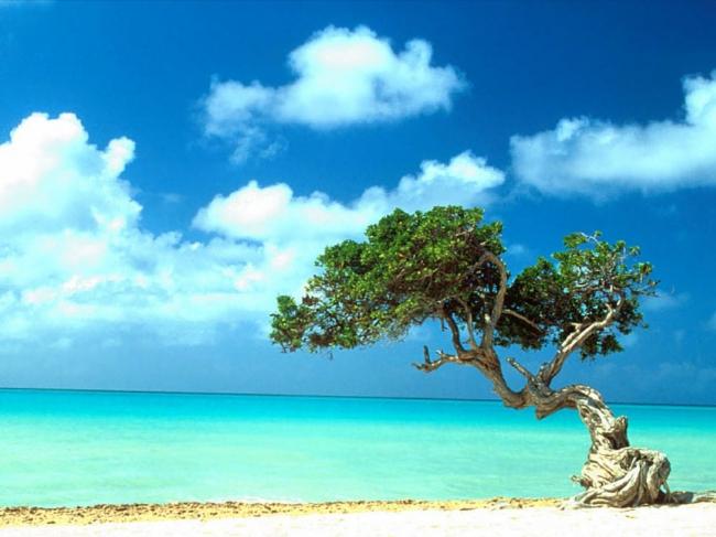 VIAJES A LA ISLA DE ARUBA DESDE ARGENTINA - Aruba /  - Buteler en el Caribe