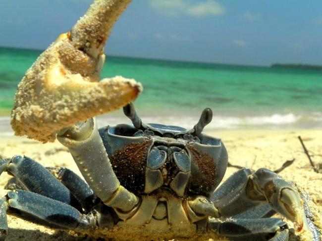 VIAJE A LA ISLA DE BARU DESDE CORDOBA ROSARIO o BUENOS AIRES - Buteler en el Caribe